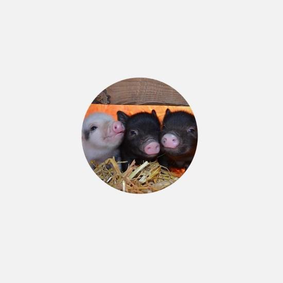 Three Little Piggies Mini Button