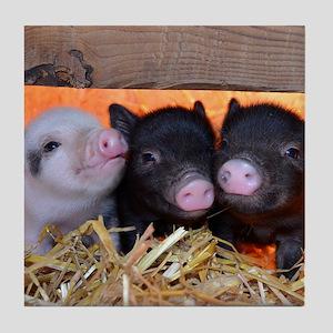 Three Little Piggies Tile Coaster