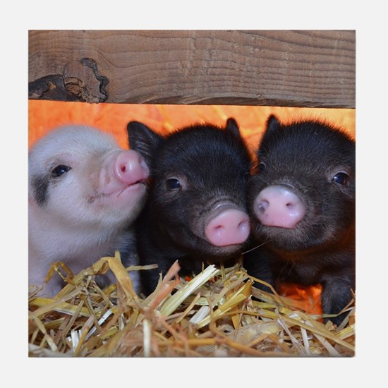 Three Little Piggies Tile Coaster