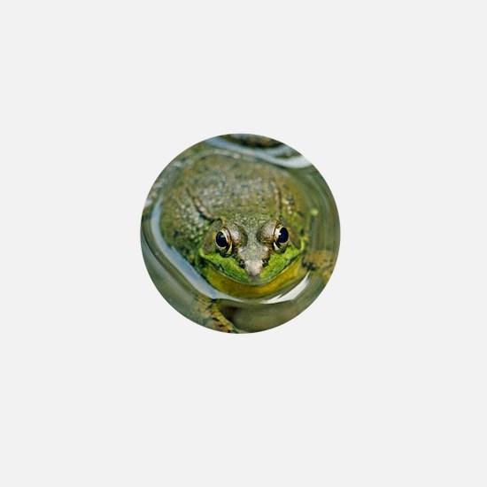 Pond frog Mini Button