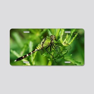 GREEN CLEAR WINGED DRAGONFL Aluminum License Plate