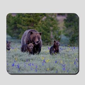 Grizzly Bear# 399  Triplets Mousepad