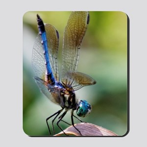Beautiful Blue Dasher Skimmer Dragonfly Mousepad
