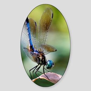 Beautiful Blue Dasher Skimmer Drago Sticker (Oval)