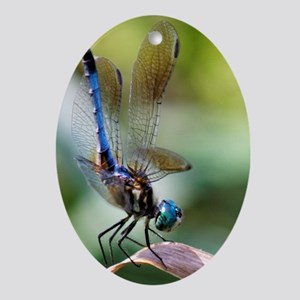 Beautiful Blue Dasher Skimmer Dragon Oval Ornament