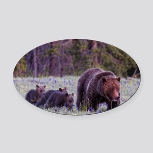 Grizzly Bear 399 Oval Car Magnet