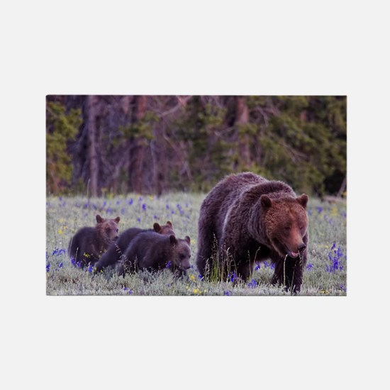 Grizzly Bear 399 Rectangle Magnet