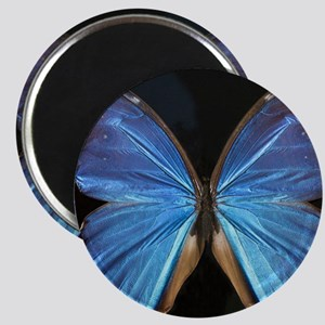 Elegant Blue Butterfly Magnet