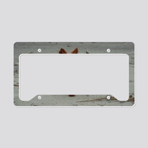 Yorkshire Terrier Hilton Head License Plate Holder