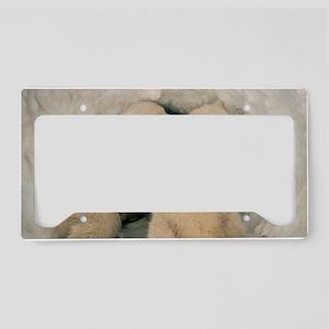 Polar Bear Cubs License Plate Holder