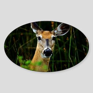 Cautious Doe Sticker (Oval)
