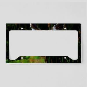 Cautious Doe License Plate Holder