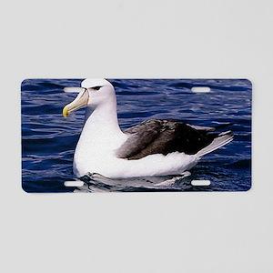 Albatross Aluminum License Plate