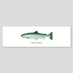 Saltwater-Steelhead Bumper Sticker