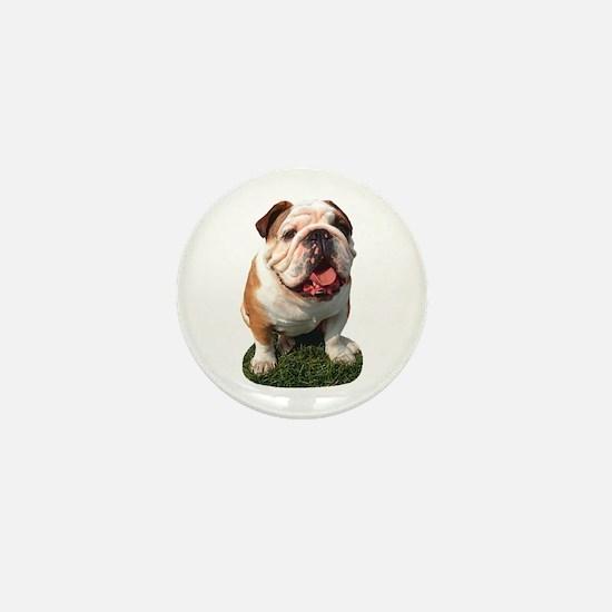 Bulldog Photo Mini Button