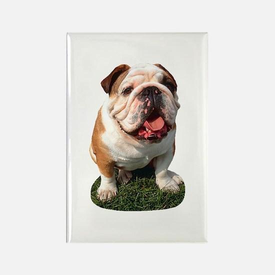 Bulldog Photo Rectangle Magnet