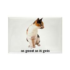 Calico Cat Photo Rectangle Magnet