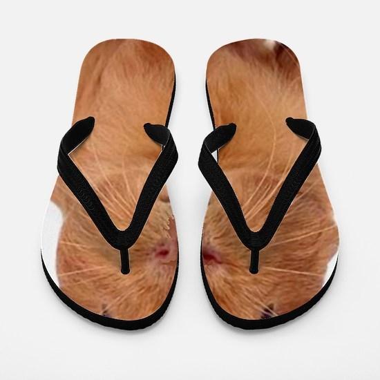 guinea pig face Flip Flops