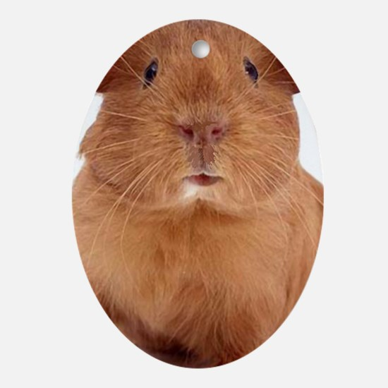 guinea pig face Oval Ornament
