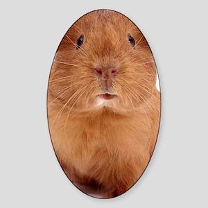 guinea pig face Sticker (Oval)
