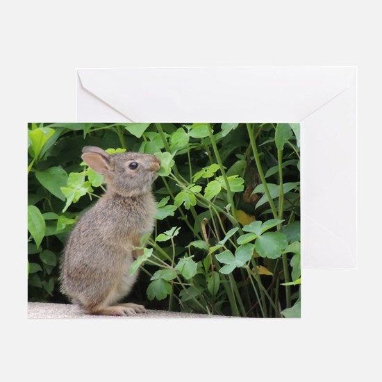 Baby Bunny Munch Greeting Card