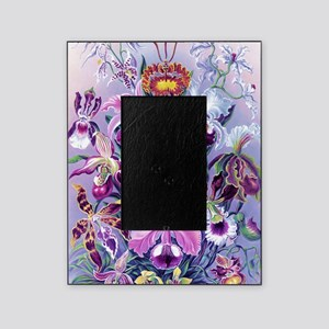 Cattleya, Lady Slipper Orchids 34 X  Picture Frame