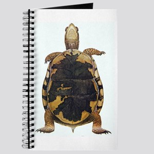 Box Turtle Straight Up Journal