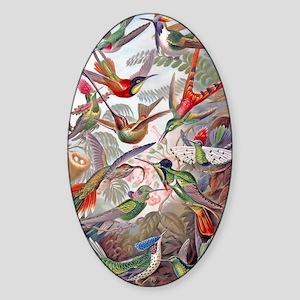 42X28 BANNER Exotic Hummingbirds 19 Sticker (Oval)