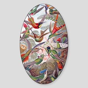 23x35 Hummingbird Poster Sticker (Oval)