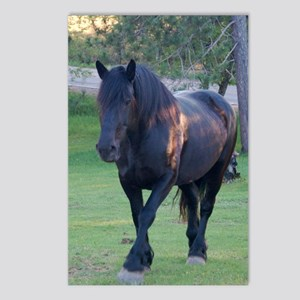 Black Percheron Mare at P Postcards (Package of 8)