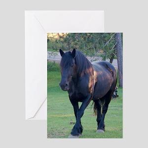 Black Percheron Mare at Pasture Greeting Card