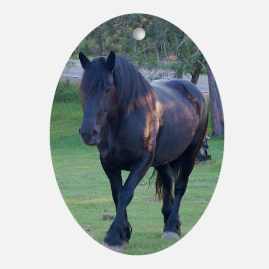 Black Percheron Mare at Pasture Oval Ornament