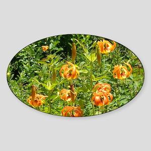 WNC Blue Ridge Parkway Glass Cuttin Sticker (Oval)