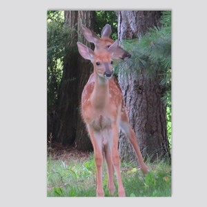 White-tailed Deer (1) ? Postcards (Package of 8)