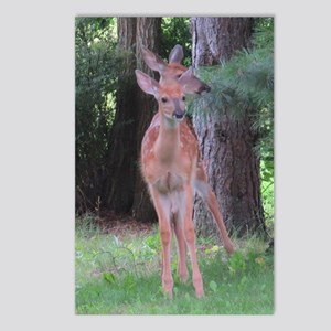 White-tailed Deer (1)? Postcards (Package of 8)