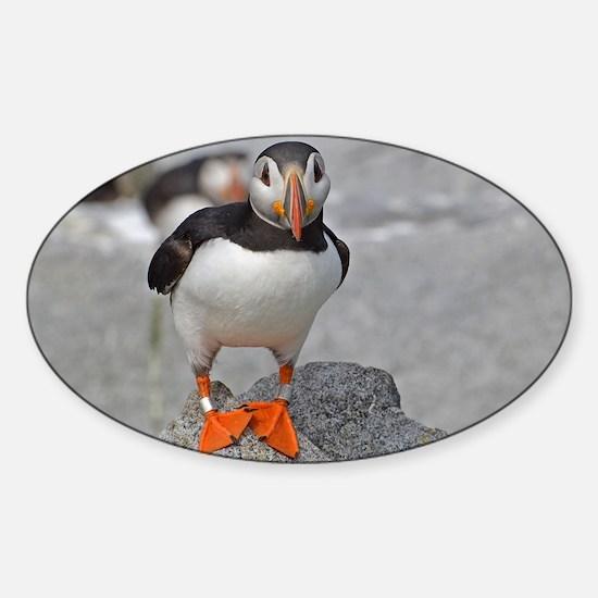 14x10_print  3 Sticker (Oval)