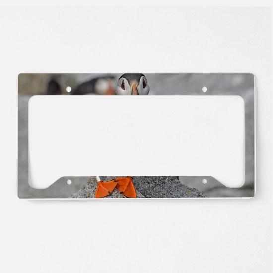 14x10_print  3 License Plate Holder