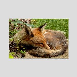 Easy Fox Rectangle Magnet