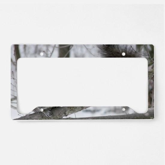 Black Squirrel License Plate Holder