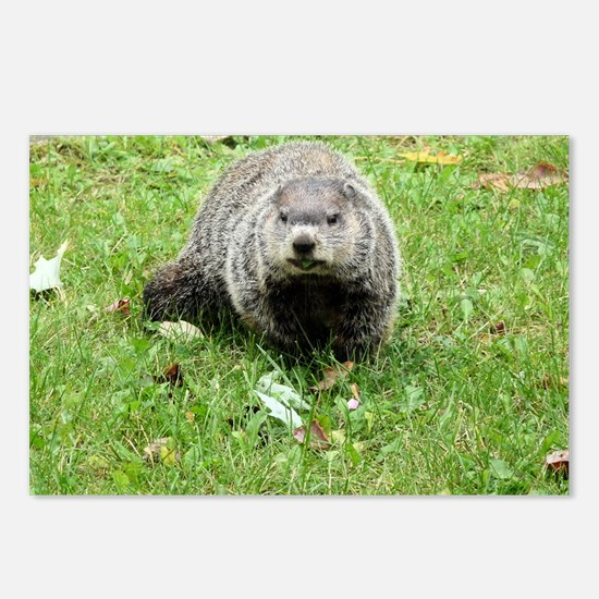 Groundhog eating Postcards (Package of 8)
