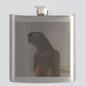 Patagonian Conure Flask