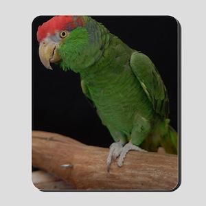 mexican redhead amazon Mousepad