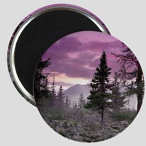 Beautiful Forest Landscape Magnet