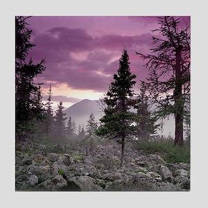 Beautiful Forest Landscape Tile Coaster