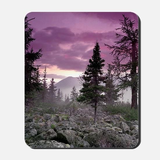 Beautiful Forest Landscape Mousepad