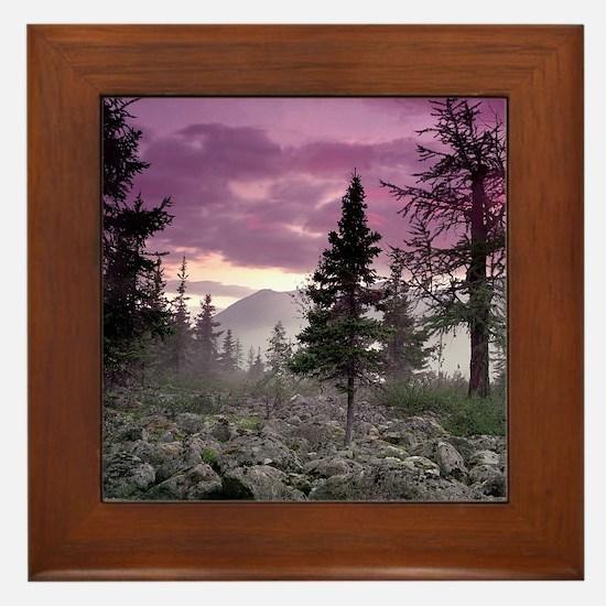 Beautiful Forest Landscape Framed Tile