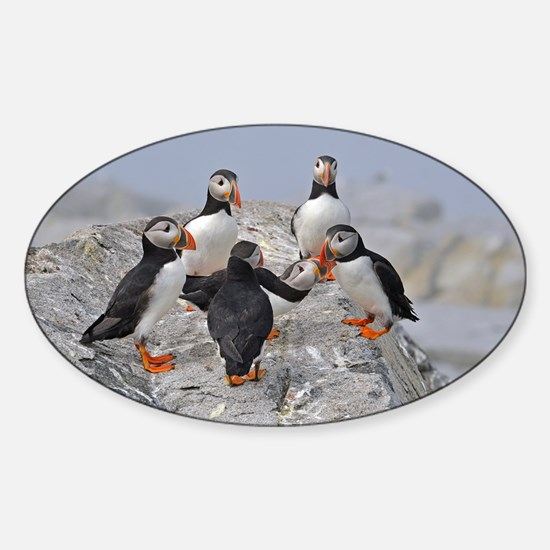 circle of puffins Sticker (Oval)
