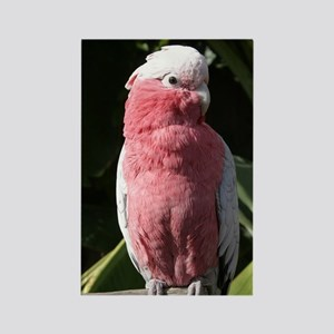 Rose Breasted Cockatoo Rectangle Magnet