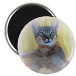Abyssinian Cat Photo Magnet