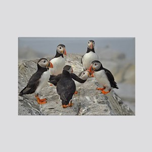 circle of puffins Rectangle Magnet